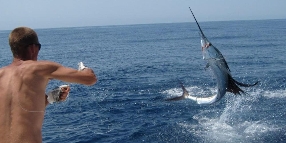 Offshore Cape Hatteras, NC beautiful lit up jumping Atlantic Sailfish.