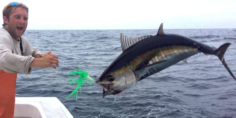 Tuna jumping on offshore charter in Hatteras