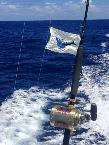 Vacationers camping in Waves in July released a beautiful Atlantic Sailfish on Longer Days.